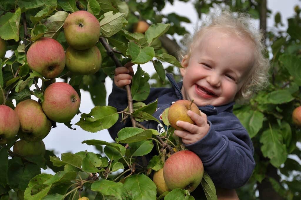 Obstbaum mit glücklichem Kind
