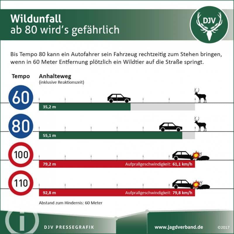 2017 12 Wildunfaelle Geschwindigkeit ohne ADAC FV