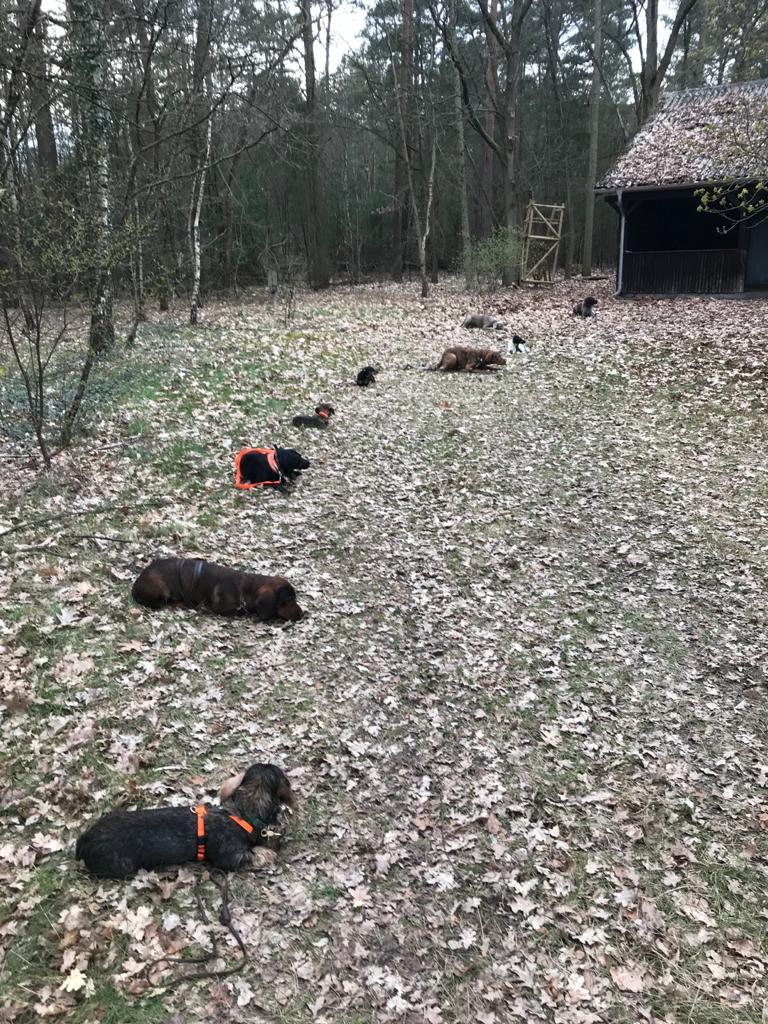Ausbildungskurs für Jagdhunde gestartet